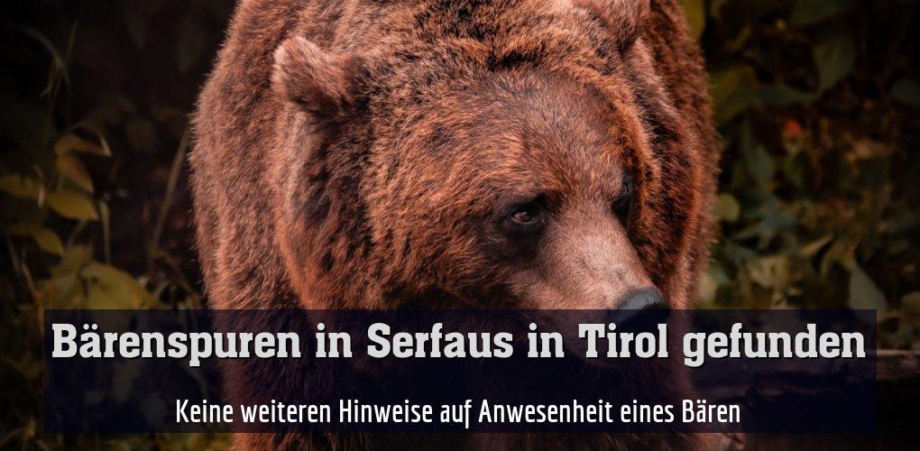 Keine weiteren Hinweise auf Anwesenheit eines Bären
