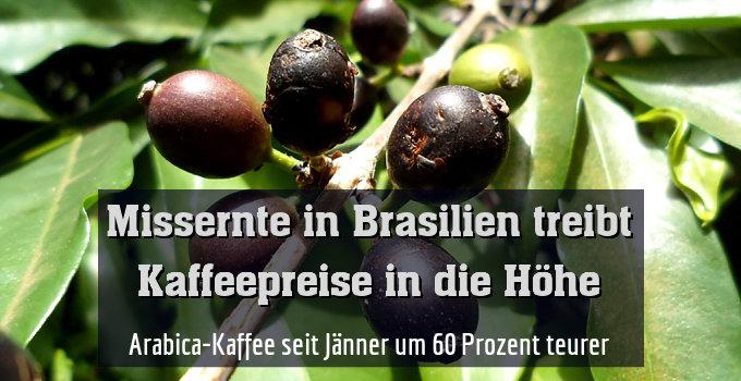 Arabica-Kaffee seit Jänner um 60 % teurer