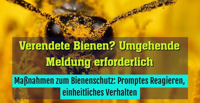 Maßnahmen zum Bienenschutz: Promptes Reagieren, einheitliches Verhalten