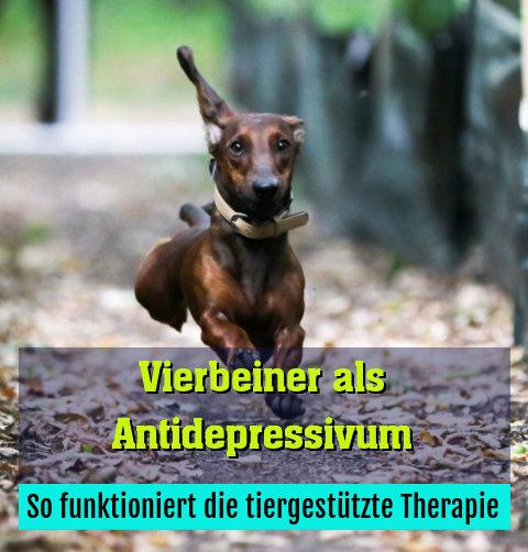 So funktioniert die tiergestützte Therapie