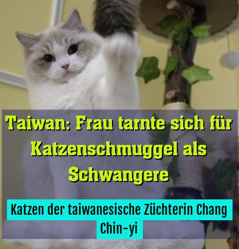 Katzen der taiwanesische Züchterin Chang Chin-yi