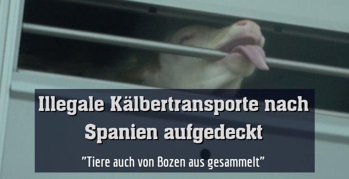 """""""Tiere auch von Bozen aus gesammelt"""""""
