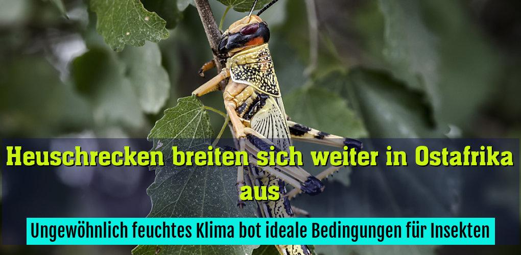 Ungewöhnlich feuchtes Klima bot ideale Bedingungen für Insekten