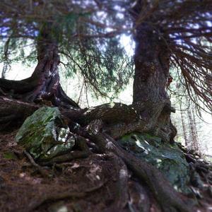 Baum Gesicht