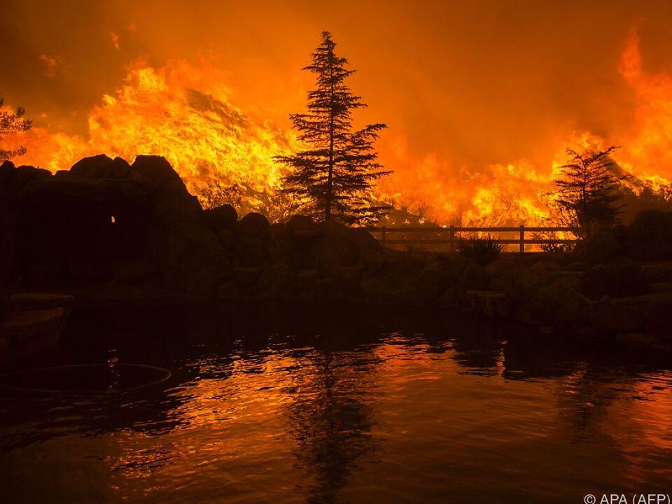 Das Feuer breitete sich rasch aus waldbrand flammen