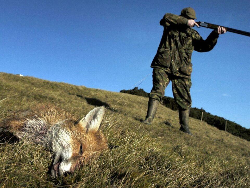 Großbritannien - Fuchsjagd - jäger