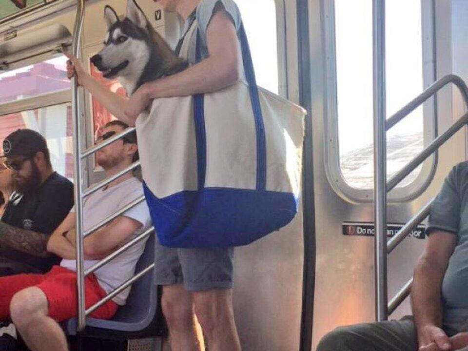 Hund, U-Bahn-Twitter-Alex Romano