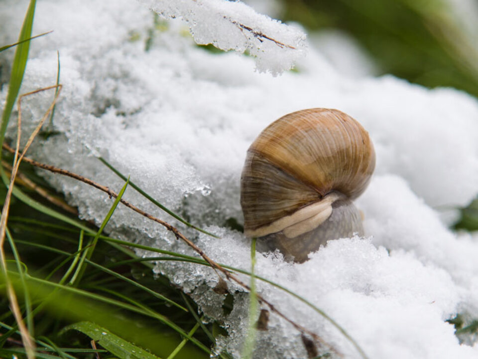 winter_fru__776_hling_gras_schnecke_wintereinbruch_wetter_schnee_apa-pd_05