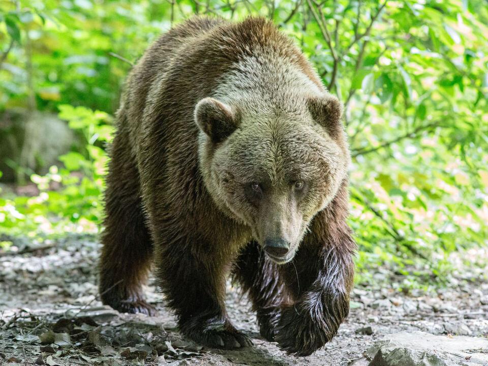 Bär GBR, THEMENBILD - der Zoo Wuppertal bär symb