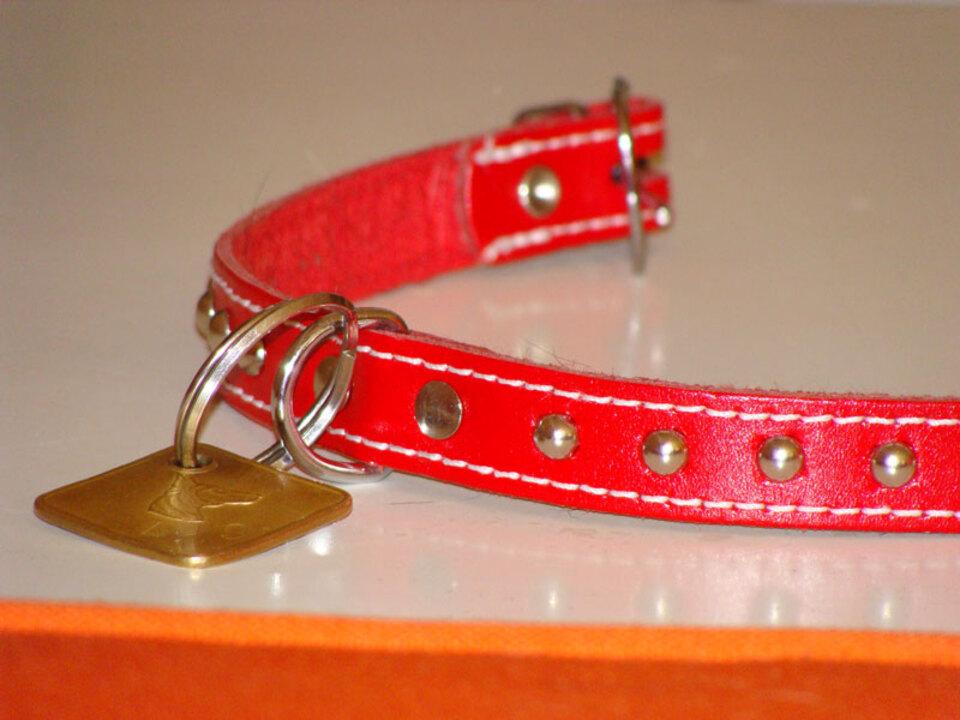 Hundehalsband-Claudia-Wittner-pix