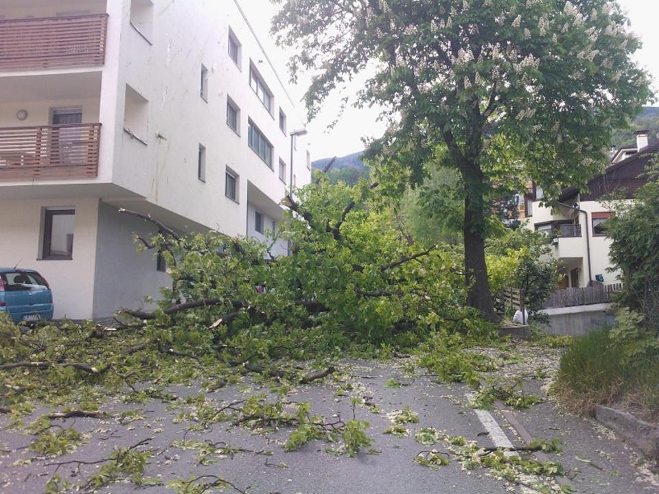 Sturm_Baum_Brixen_Mozartallee_FF_Brixen