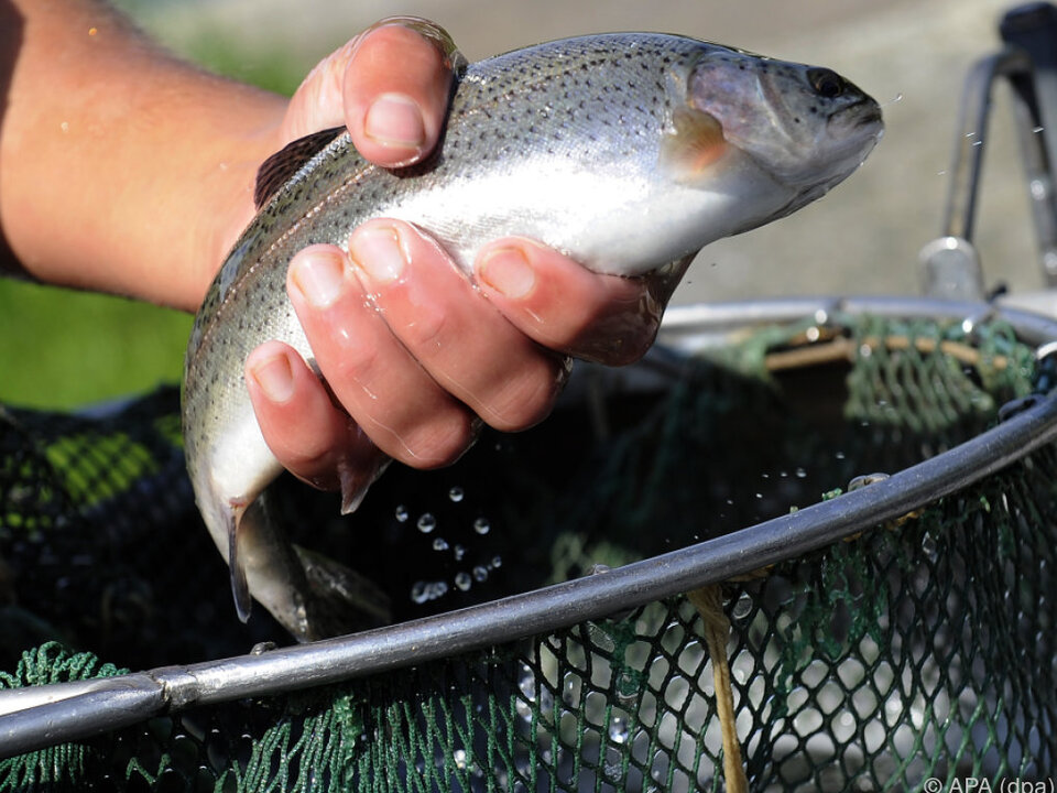 Der Fischbedarf wird vor allem über Importe gedeckt