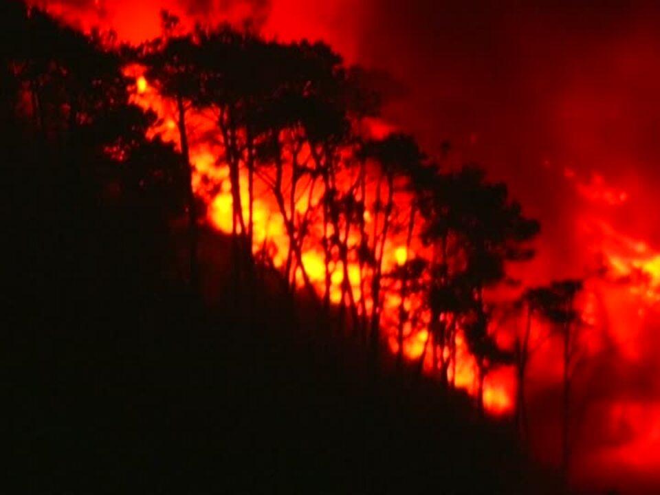 waldbrand feuer Deutsche Touristen fliehen vor Waldbränden auf Madeira