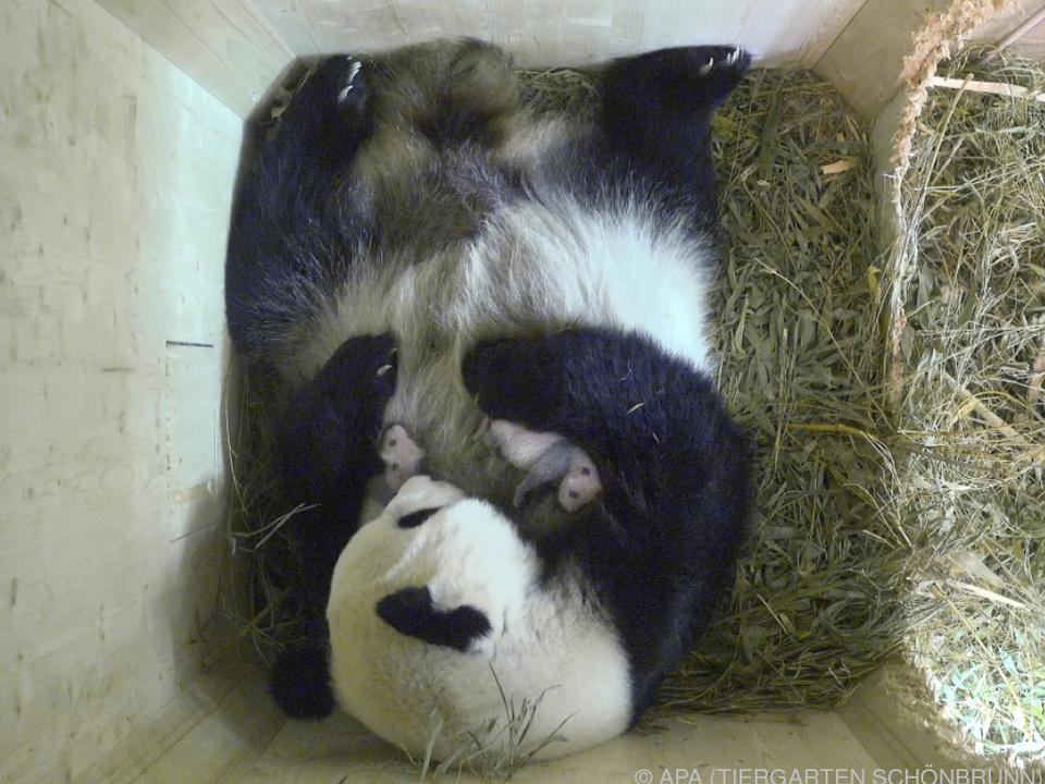 Die Zwillinge kamen vor 16 Tagen zur Welt