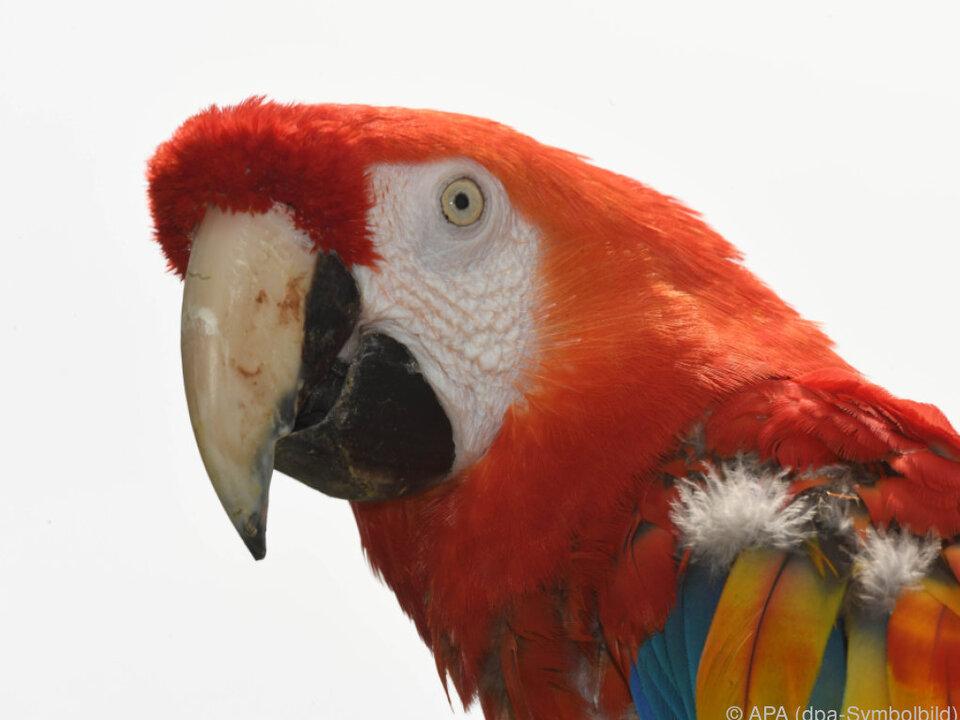 Ein sprechender Papagei löste einen Polizeieinsatz aus
