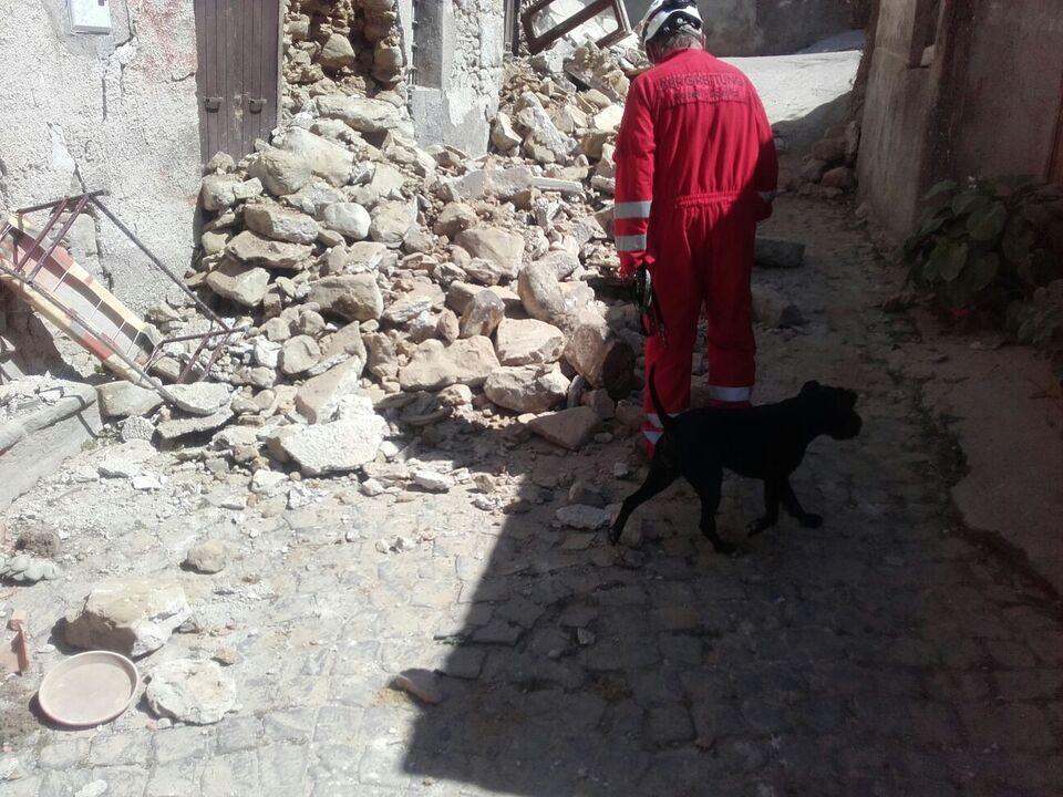 Erdbeben Amatrice Südtirol Trümmer Hund