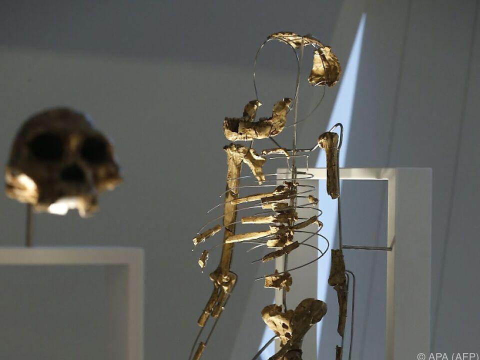 Etwa 40 Prozent des Skeletts von Lucy sind erhalten