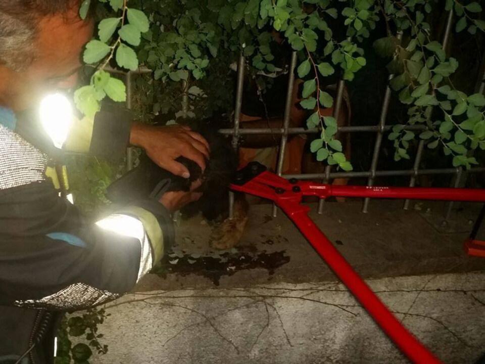 hund-Freiwillige-Feuerwehr-Leifers