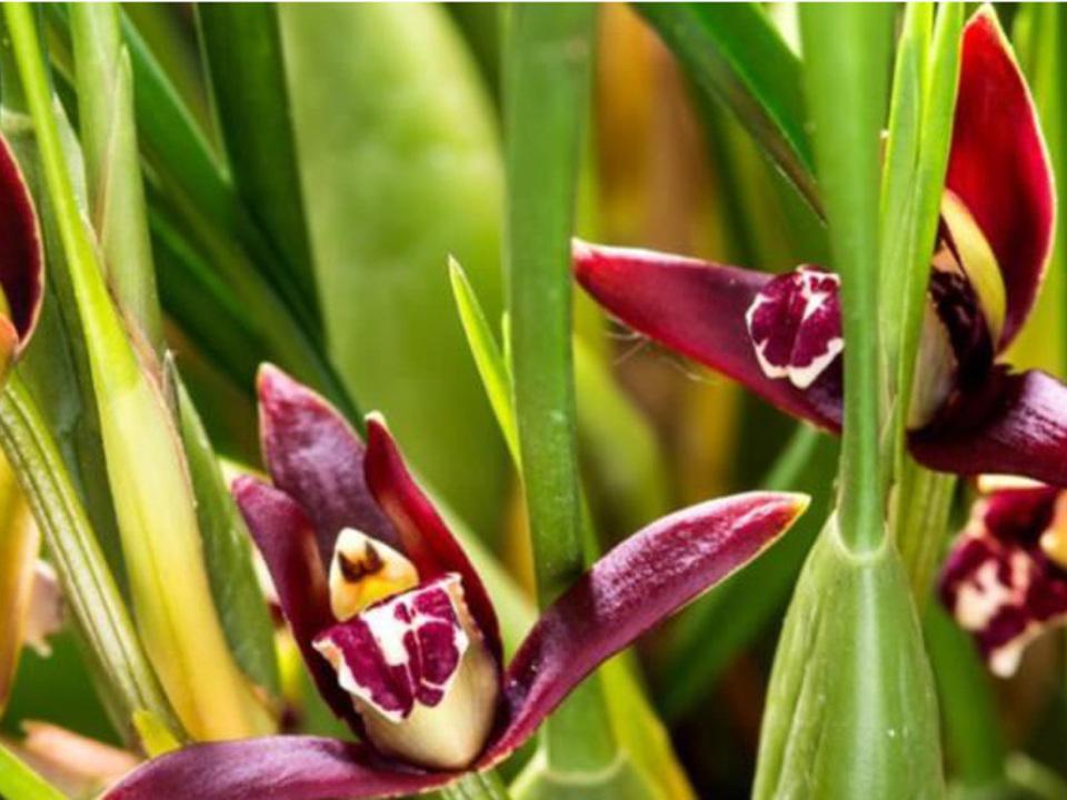 orchideenwelt-dsg