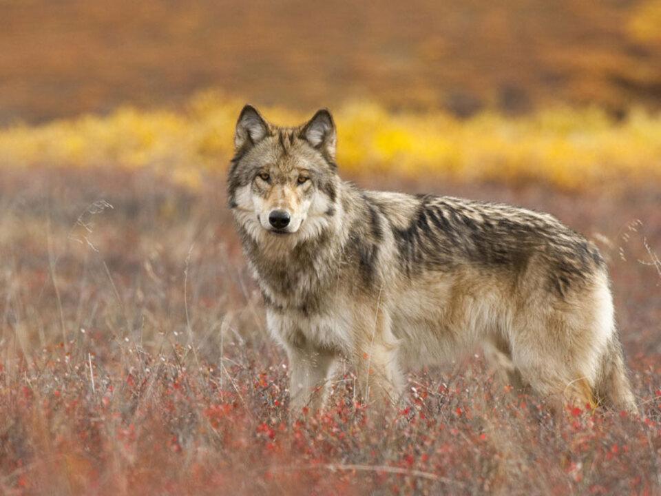wolf-Florian-Schulz-c