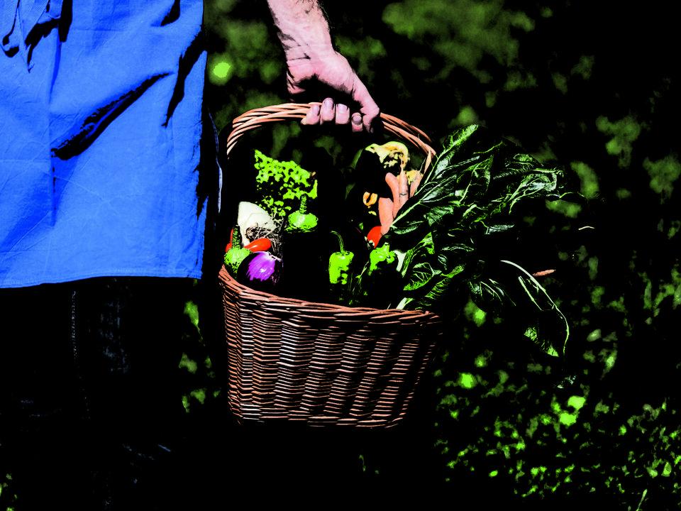 Suedtirol, Meran, Valteninhof, Bio, Biohof, Roter Hahn, Produkte, Gemüse Korb,
