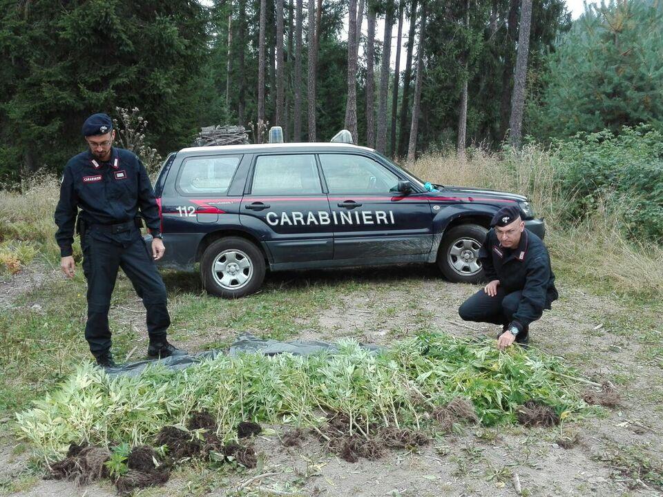 Carabinieri Marihuana-Plantage Karneid