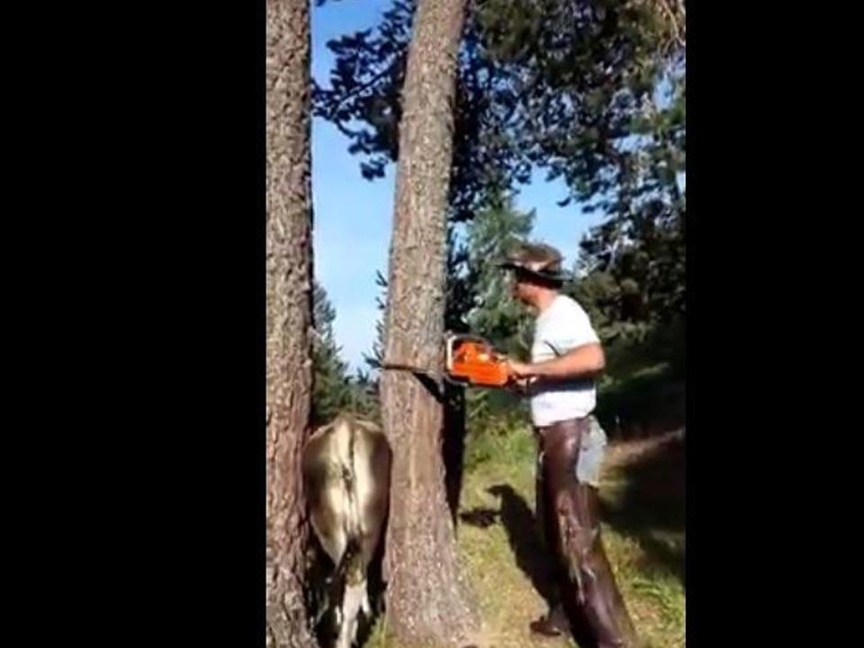 Facebook-Wurzer-Alm-Kuh eingeklemmt