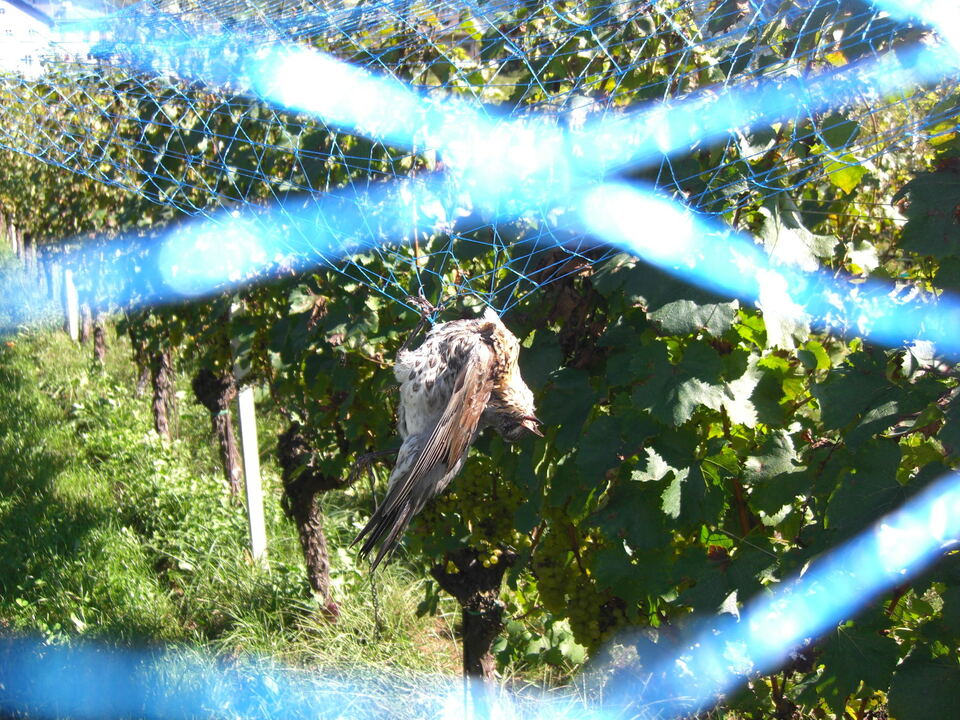 Schutznetz Vogel