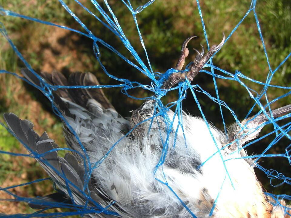 Schutznetz Vogel2 Gefahr