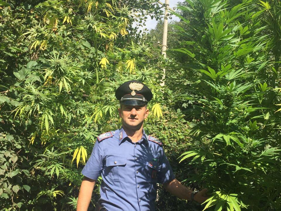i carabinieri all\'interno della piantagione di glorenza