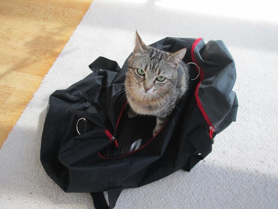 Katze Südtiroler Tierschutz mit leeren taschen - protezione animali con le tasche vuote