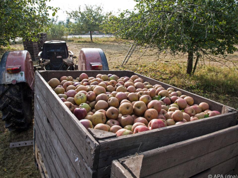 äpfel 2016 war kein gutes Apfeljahr