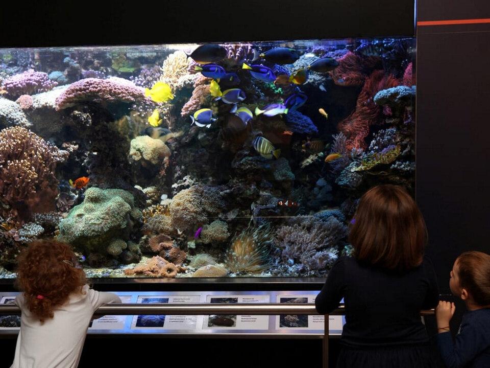 naturkundemuseum-aquarium-lpa