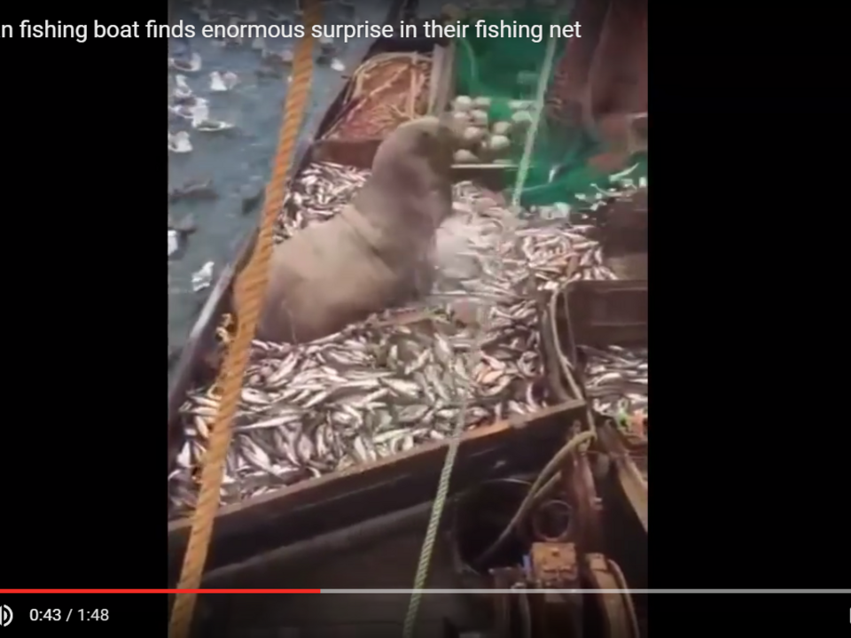 YouTube/DailycrazyVids01 -WTF!!Russian fishing boat finds enormous surprise in their fishing net