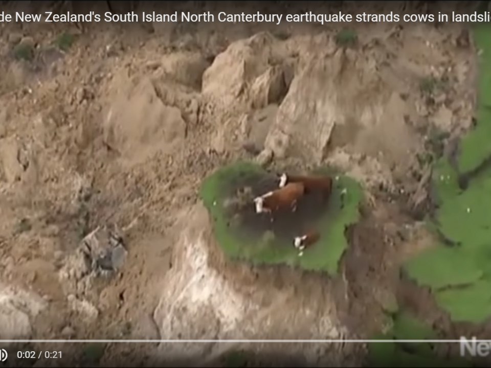 YouTube/ZCC VID -7.5 magnitude New Zealand\'s South Island North Canterbury earthquake strands cows in landslides