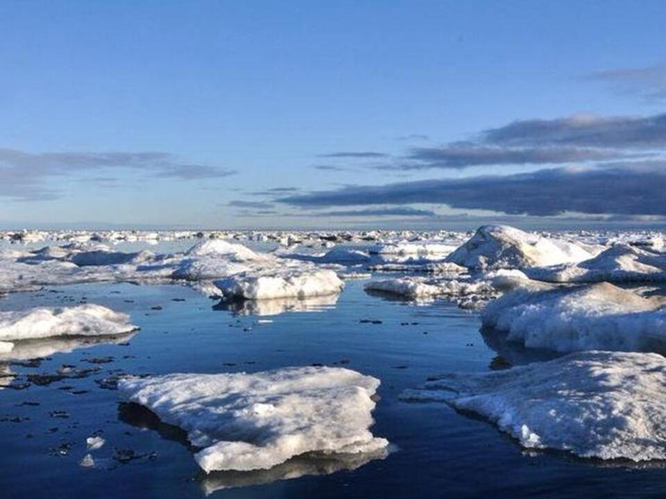 Kanada Arktis Seelöwe twitter-@AndrewLFWong