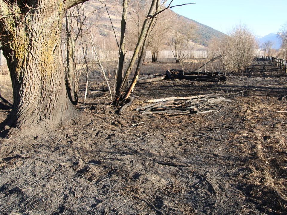 Verbranntes Biotop/Umweltschutzgruppe Vinschgau