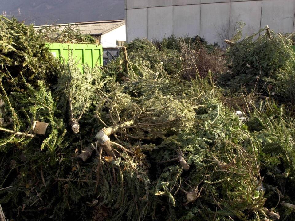 weihnachtsbaum christbaum
