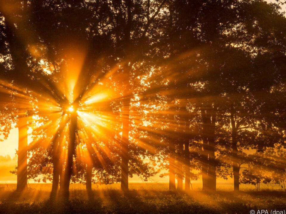 Sonne Wald Die Temperaturen stiegen sowohl am Land als auch im Wasser wald sonne sonnenuntergang sommer