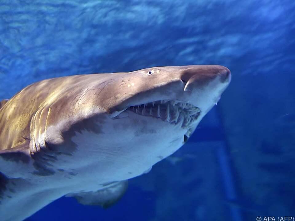 Haiangriffe nehmen weltweit zu