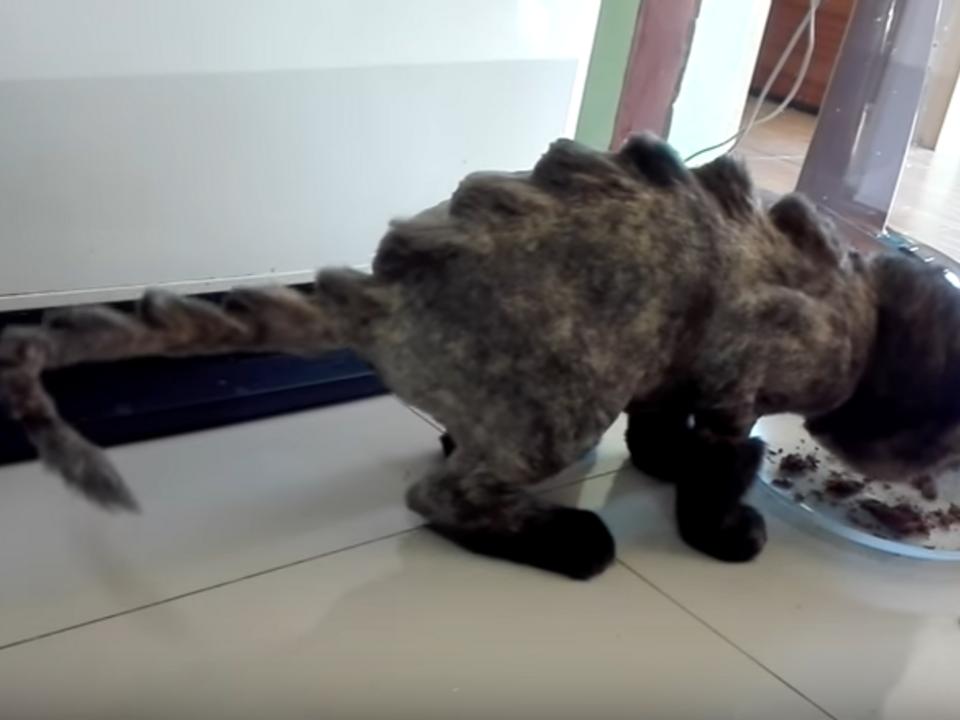 Katze mit Dinosaurier-Haarschnitt