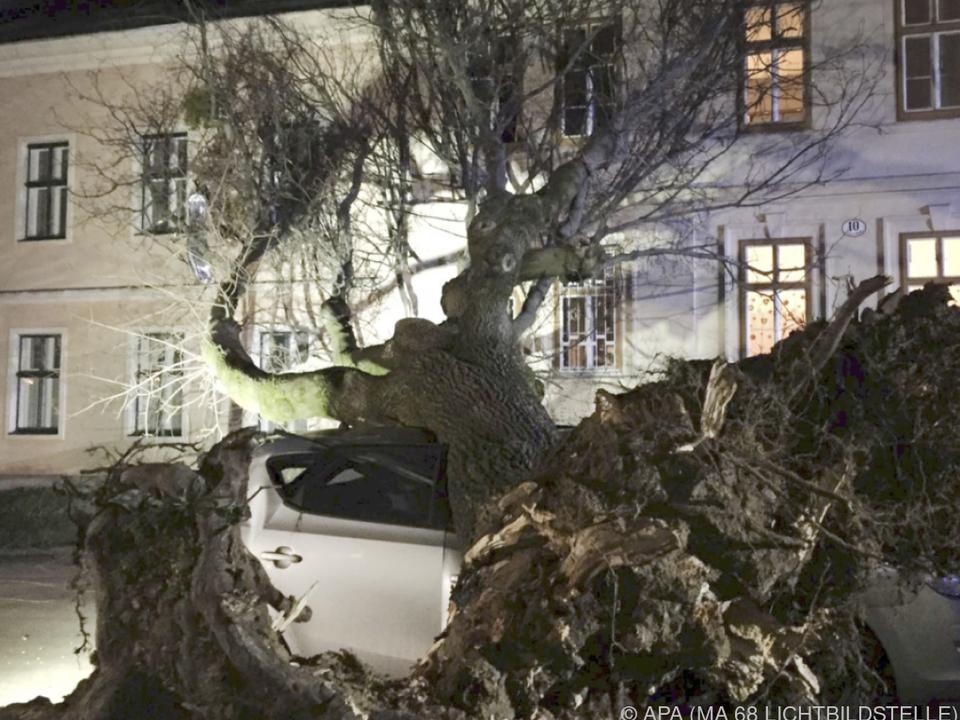 Selbst massive Bäume wie hier in Wien entwurzelte \