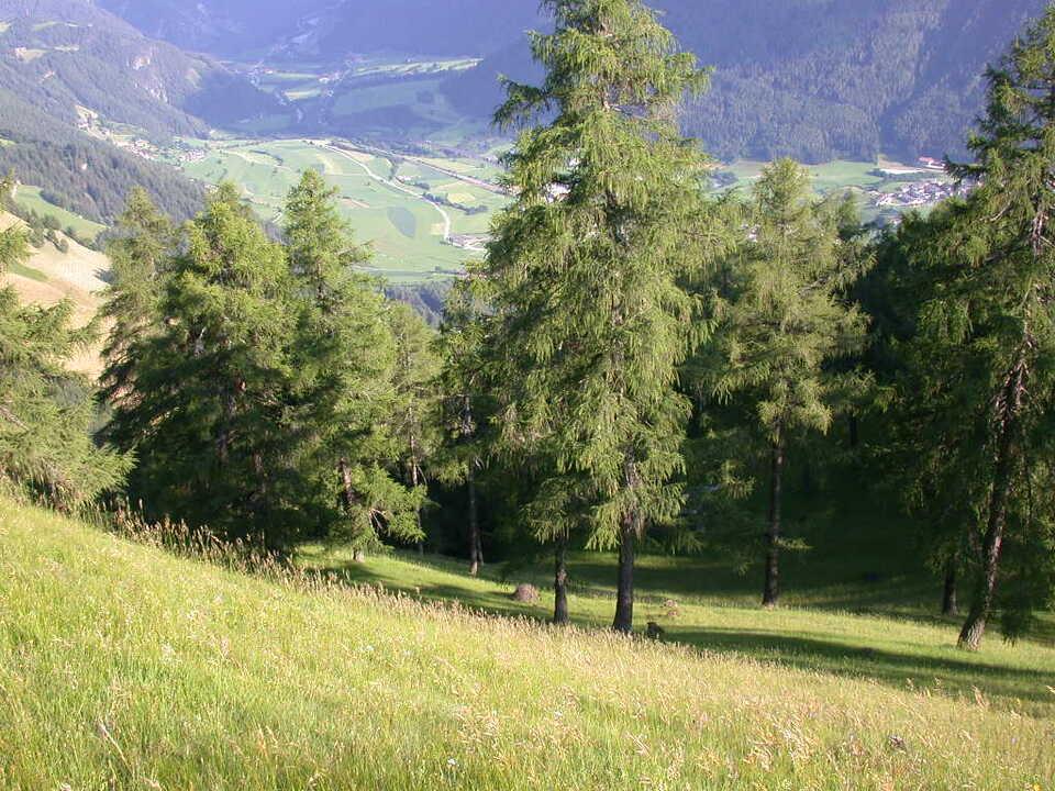 911292_Wiese_Wald - raumordnung landwirtschaft südtirol