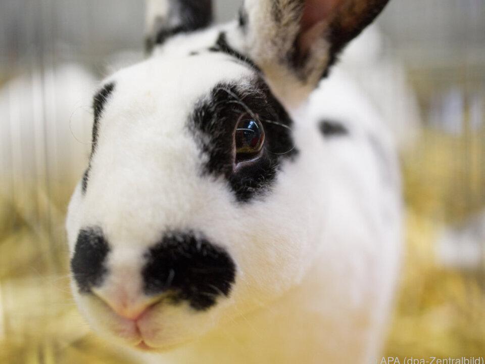 Abenteuer für die Kaninchen