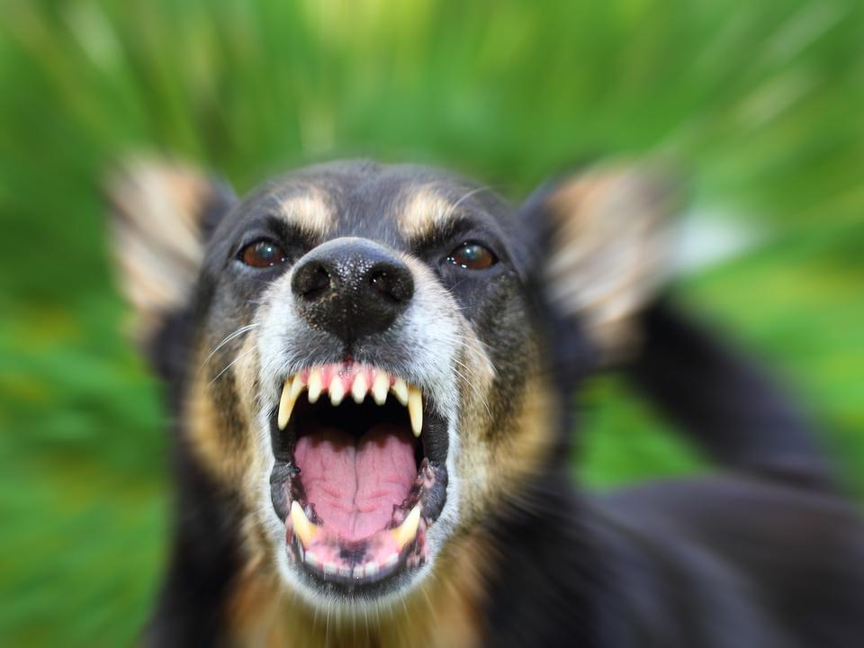 hund zähne bedrohen gefahr