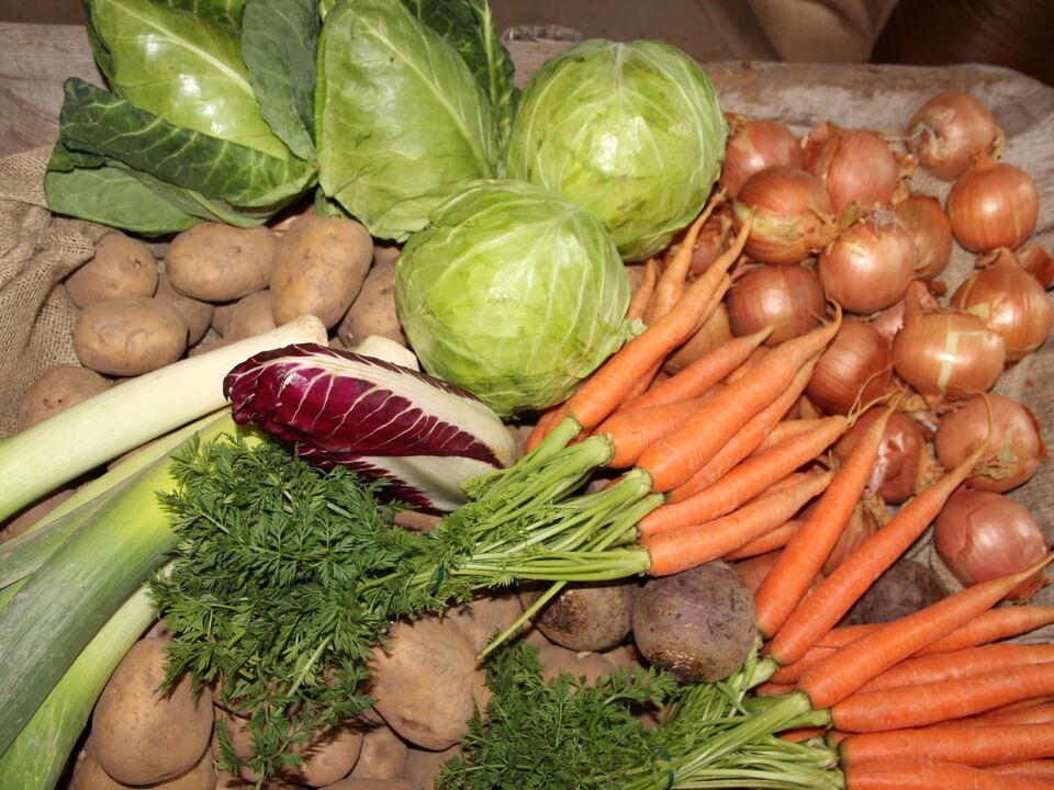 Gemüse/Gemüseanbautagung Fachschule Salern