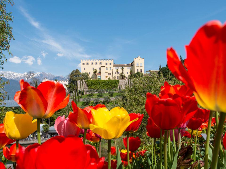 Schloss Trauttmansdorff Tulpen