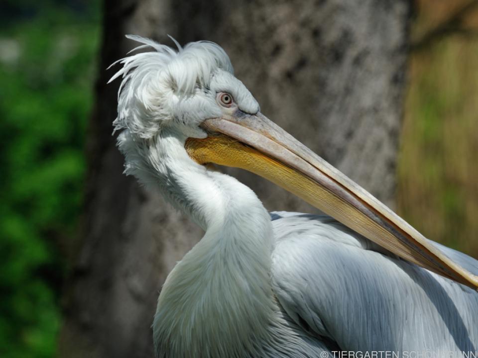 Ansteckungsweg unklar, Wildvögel wahrscheinliche Quelle