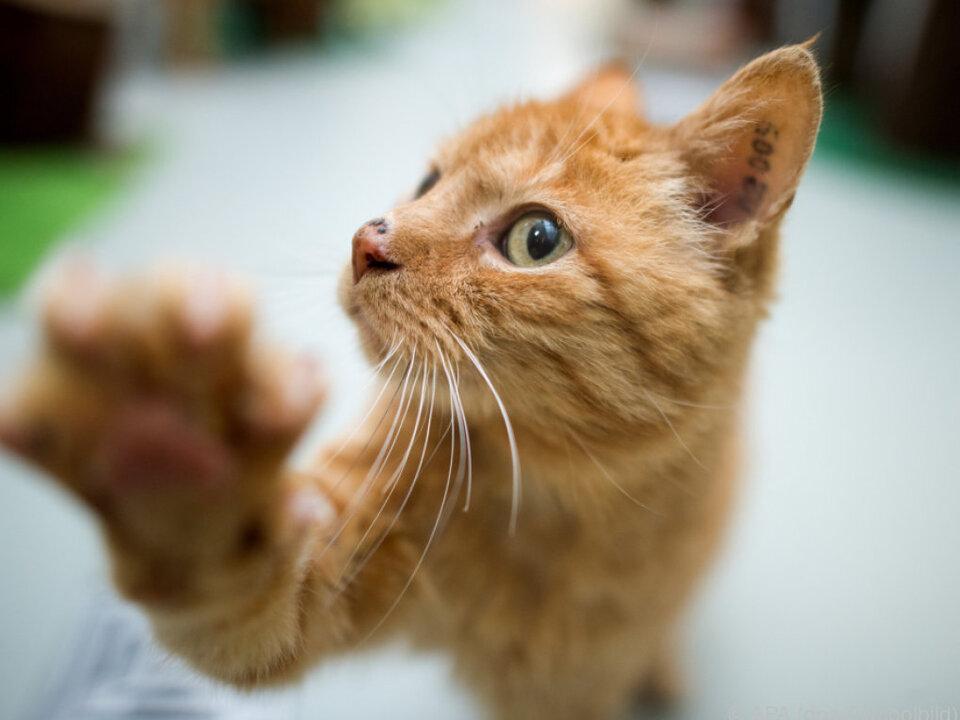 Die eingesperrte Katze wusste sich zu helfen sym