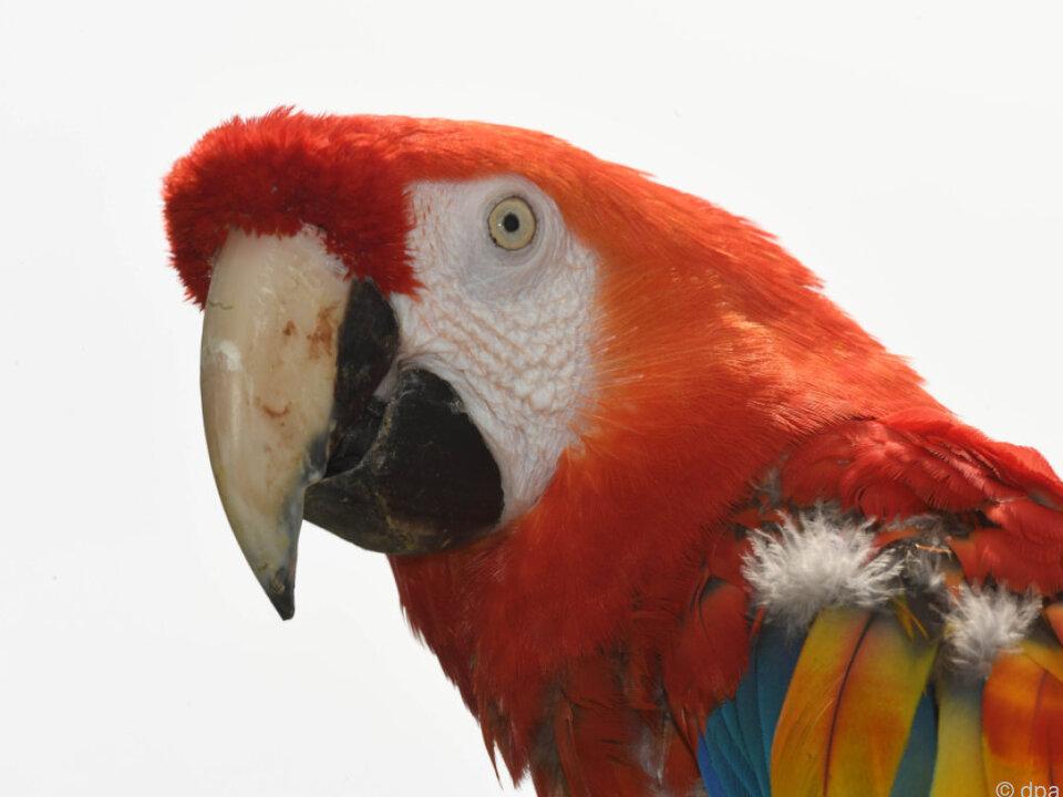 Die Papageien sind kaum zu kontrollieren